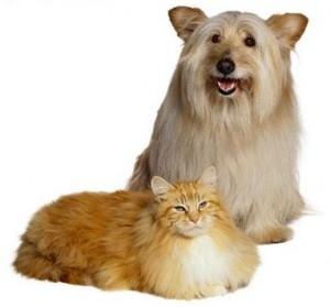 dog_and_cat_white_background-1