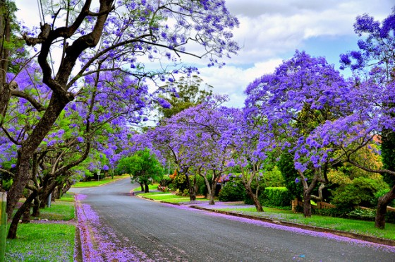 Image result for beautiful flowering trees